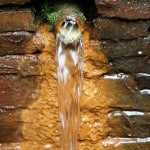 Flowing Iron Water in Alpujarras - from a metal pipe with bricks as a background