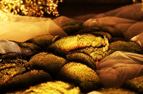 Moss and green stones in Girona's Flower Festival