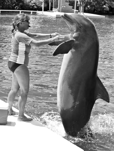 Dolphin & Trainer at Florida's Dolphin Research Center