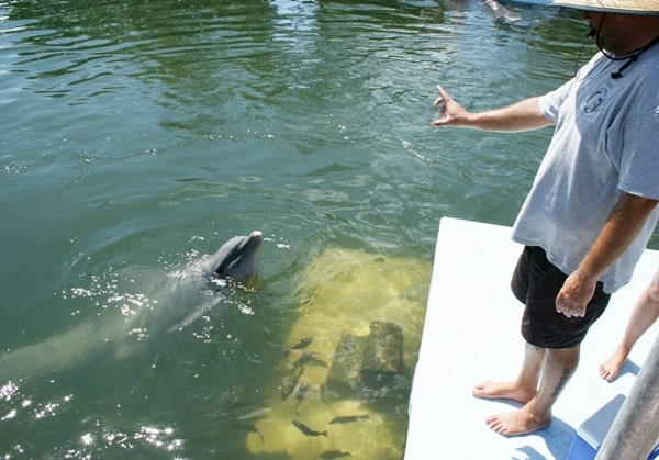 Dolphin trainer makes tiny gesture to command dolphin