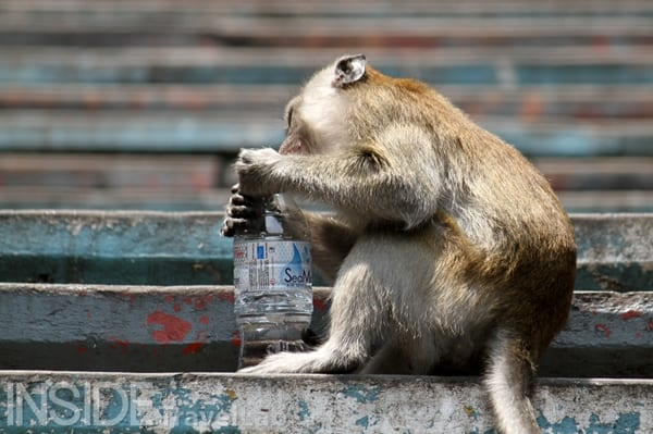 Batu Monkey with water bottle