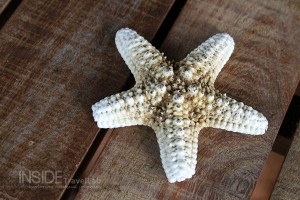 Private island starfish