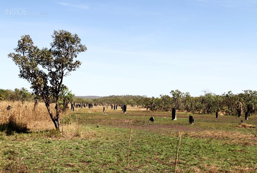 Magnetic Termite Mounds004