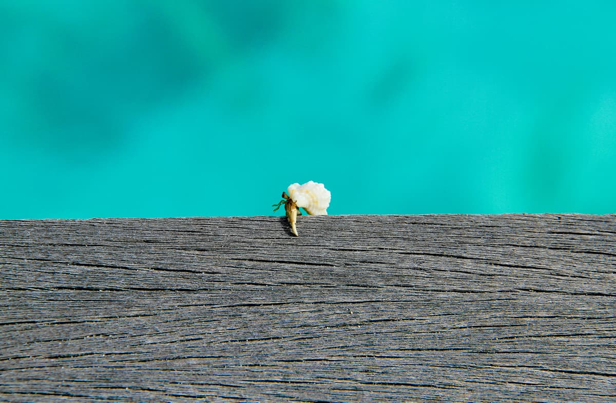 What is home - crab takes his home with him in the Maldives