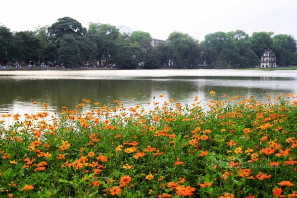Flowers at the edge of the lake in Hanoi
