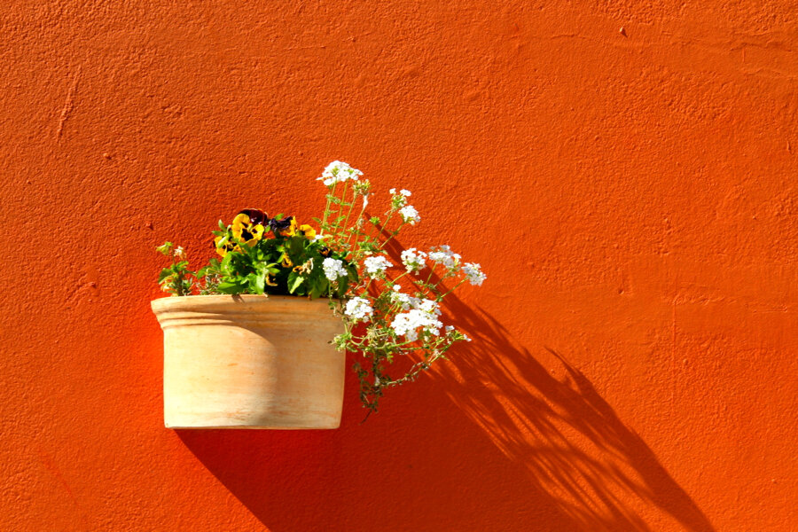 Orange wall with plants in Bo Kaap