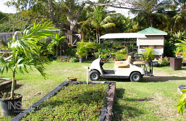 Buggy in Antigua Galley Bay