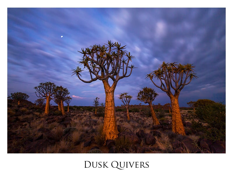 Dusk Quivers by Richard Bernabe