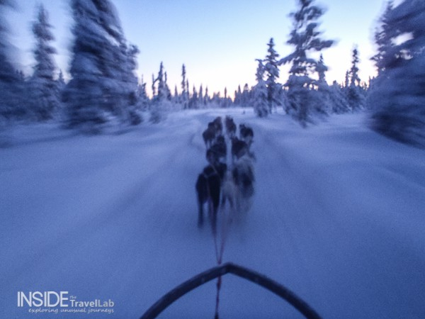 Husky sledding in Sweden