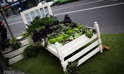 Bed with veg in Dublin