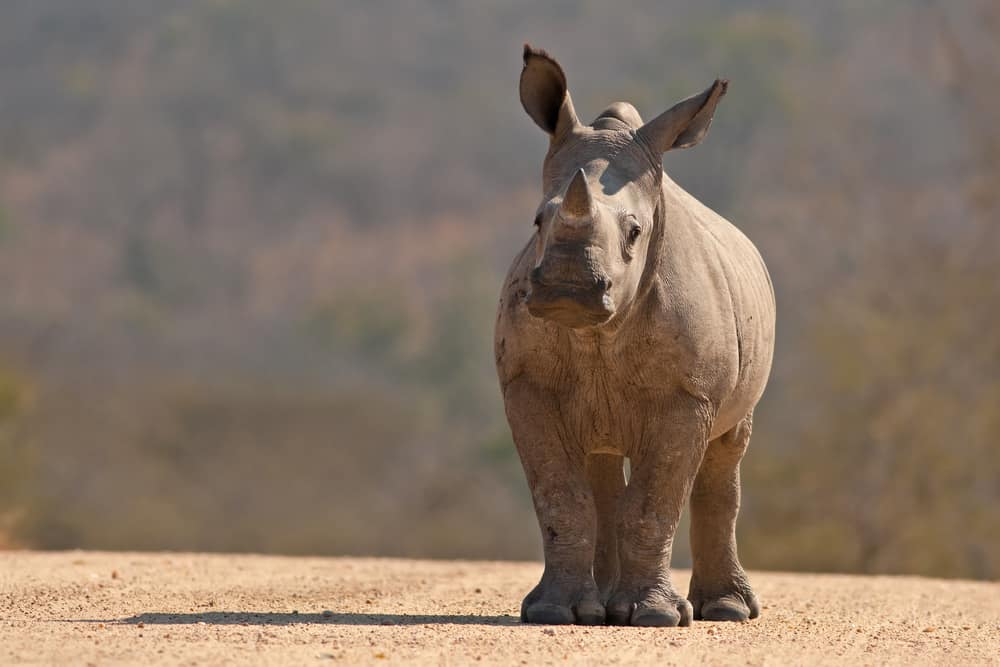 Rhino on @insidetravellab