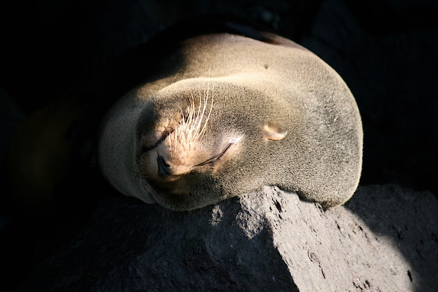 Sea lion in Galapagos