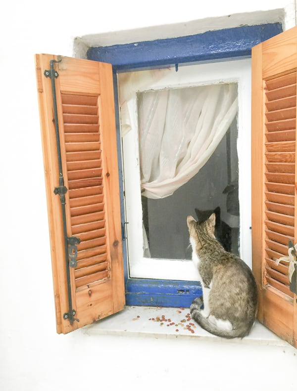 Cat in Anafiotica Athens