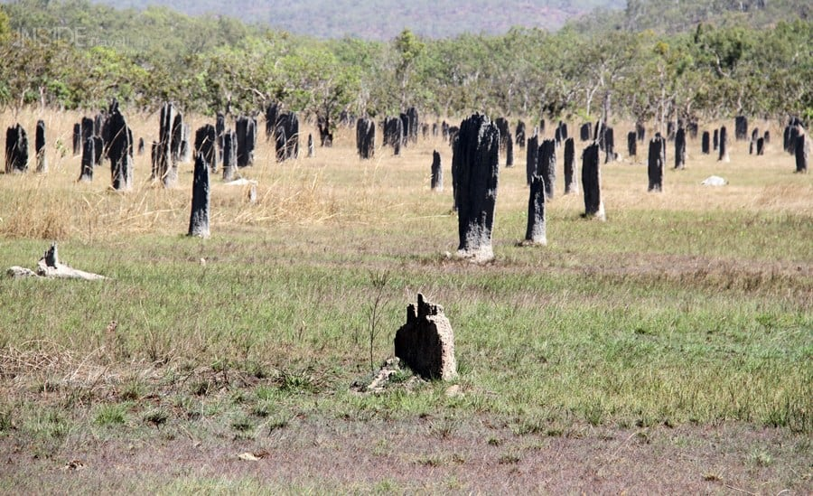 Landscape view of magnetic termite mounds in Australia in Litchfield Park Northern Territory