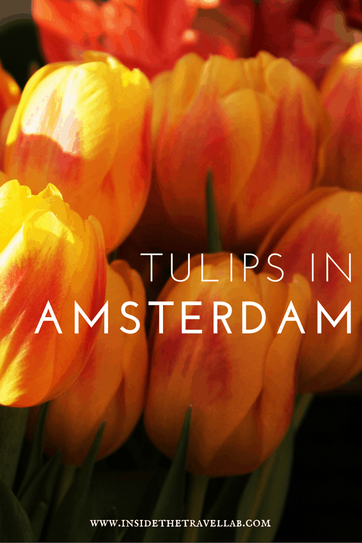 Highlights of Amsterdam. Back in 1637, a single tulip bulb could sell for more than ten times the annual income of a skilled craftsman in the Netherlands. Why? How? Find out. - via @insidetravellab