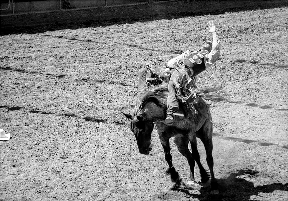 Bucking bronco at the Canada Rodeo Williams Lake