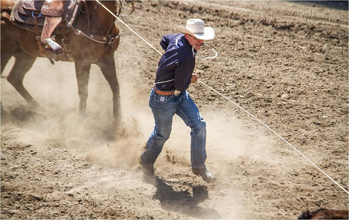 Steer wrestling at the Canada Rodeo