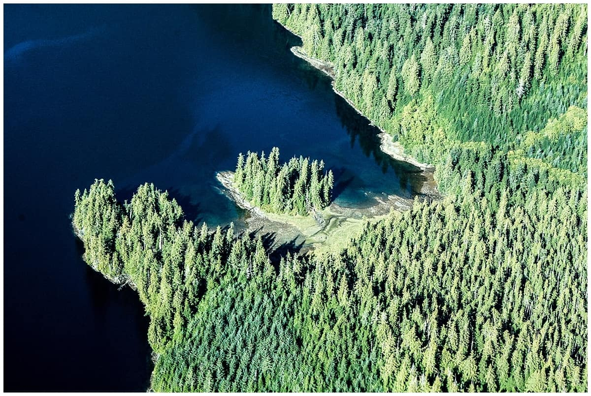 Forest and lakes of Alaska from the sky