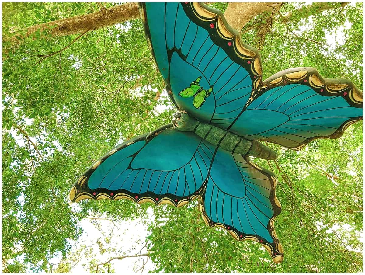 Marie Selby Gardens Butterfly