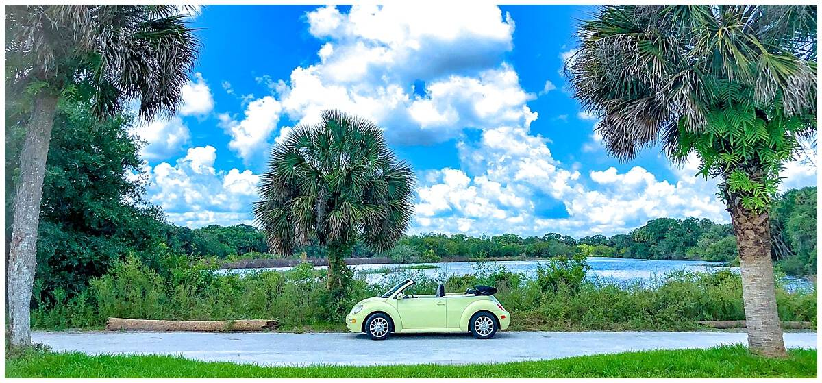 Unusual things to do in Sarasota - Road trip Myakka State Park