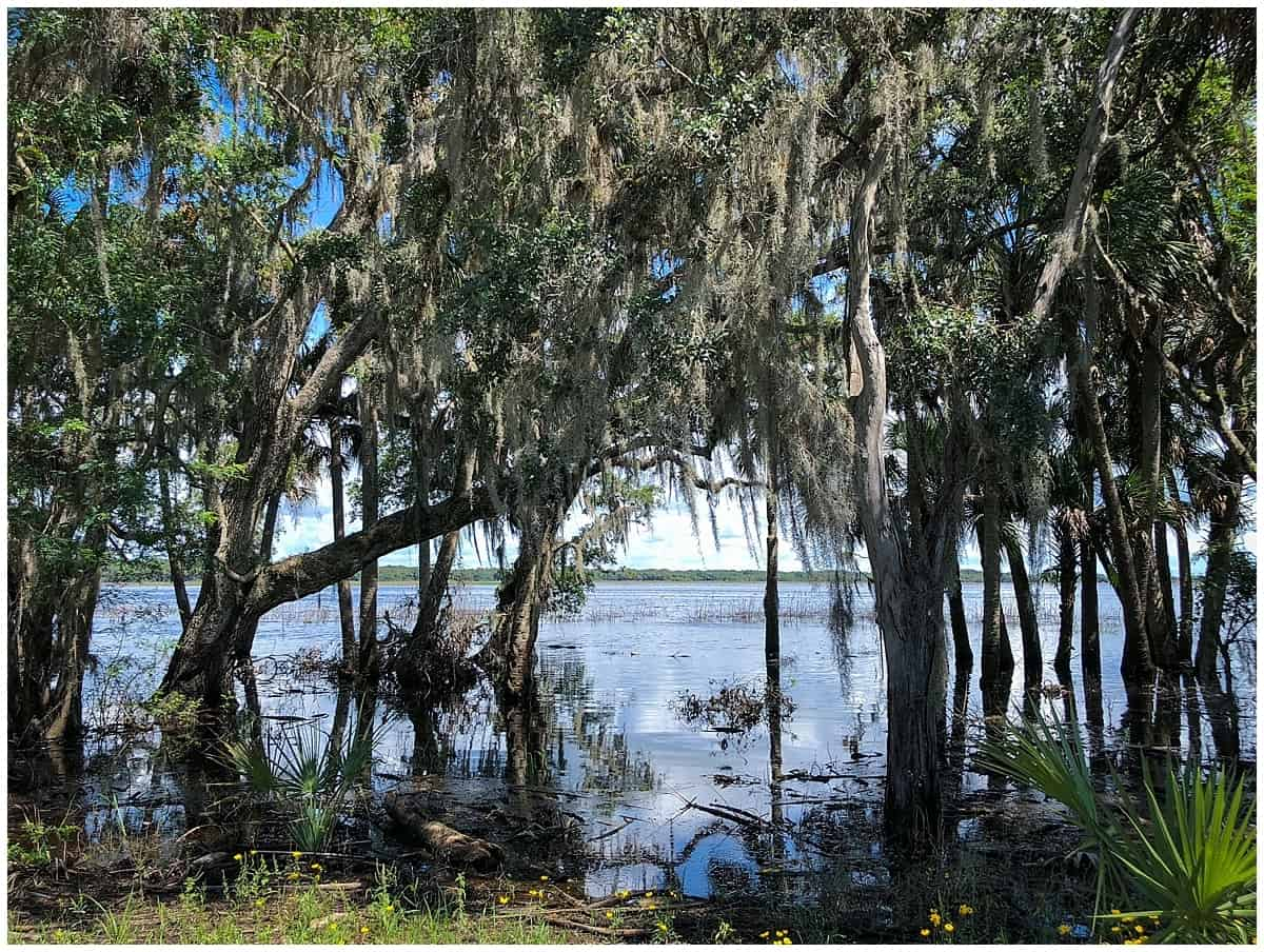Unusual things to do in Sarasota - Trees in Myakka State Park
