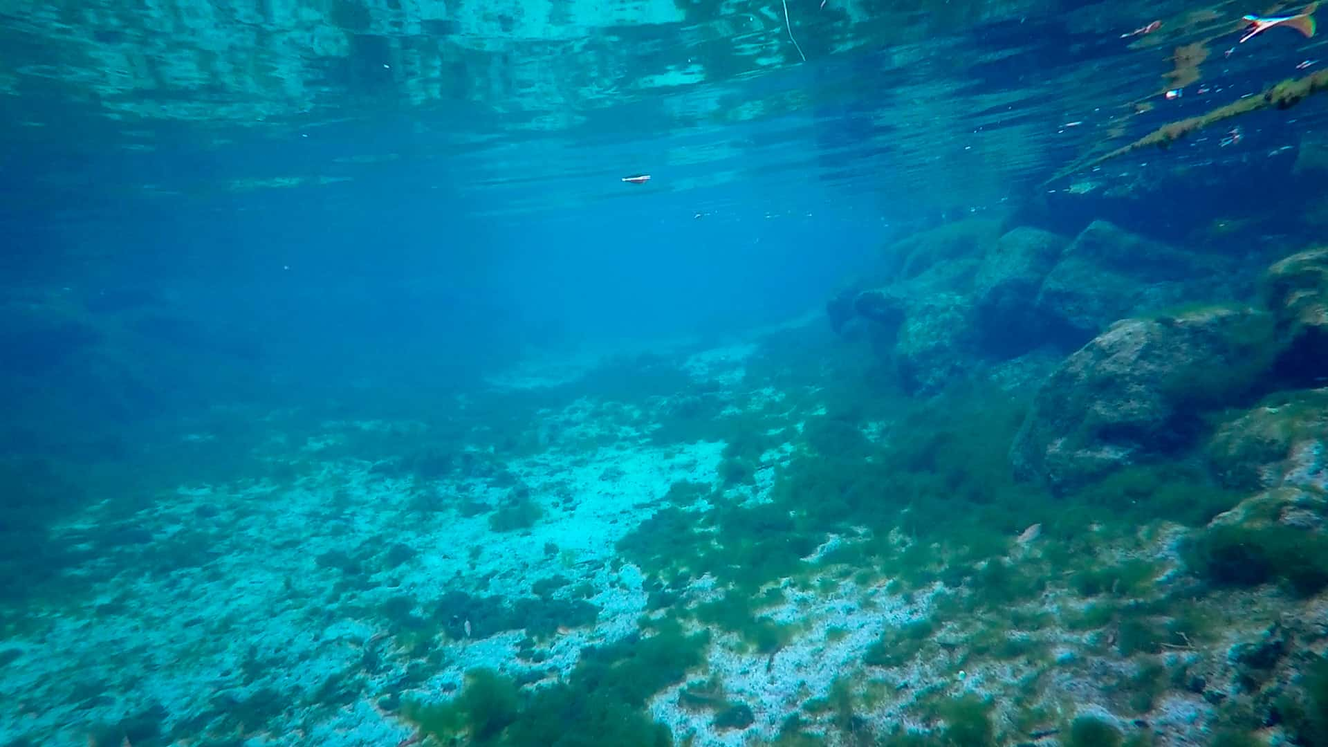 Seabed view at Crystal River - Swimming with manatees in Florida's Crystal River