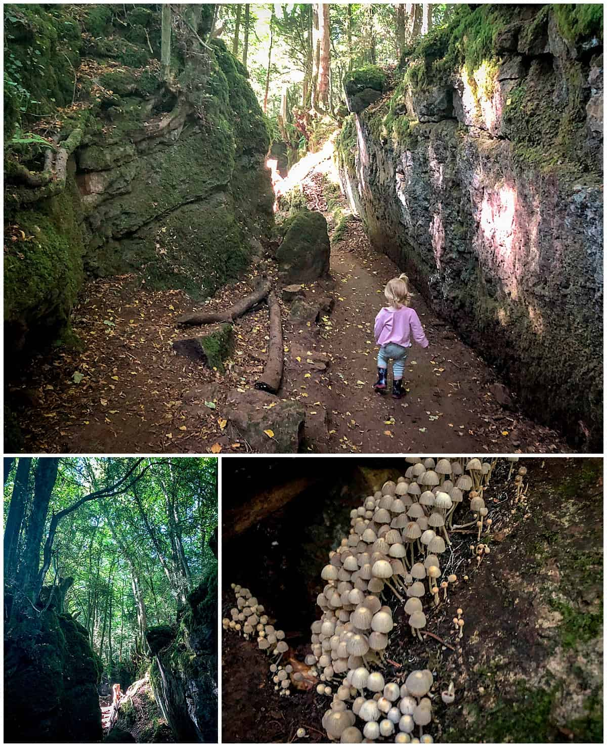 Puzzlewood - things to do in the Forest of Dean