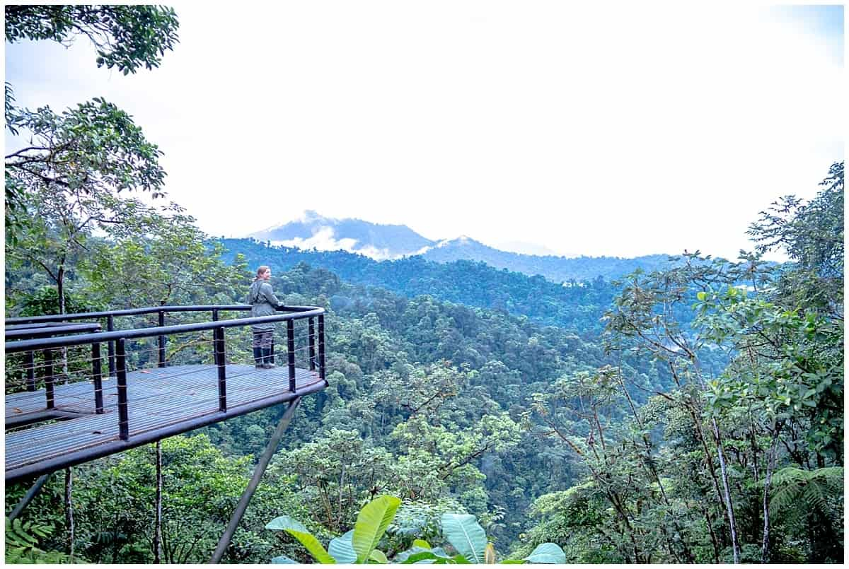 Abi King - woman looking across a viewing platform at Mashpi Lodge in a cloud forest in Ecuador