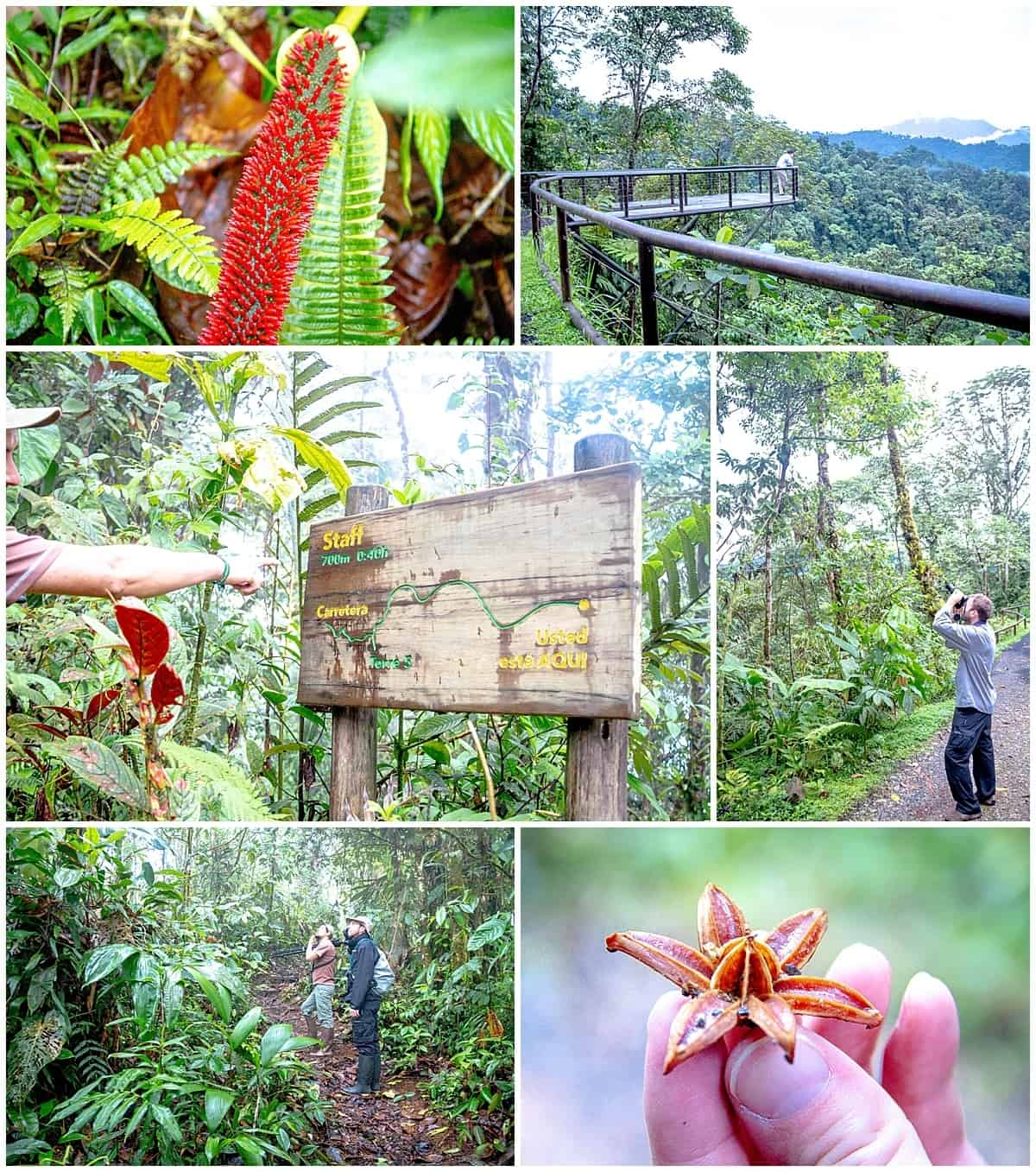 Many activities available at the Mashpi Lodge in Ecuador Cloud Forest - signpost, plants and new stars