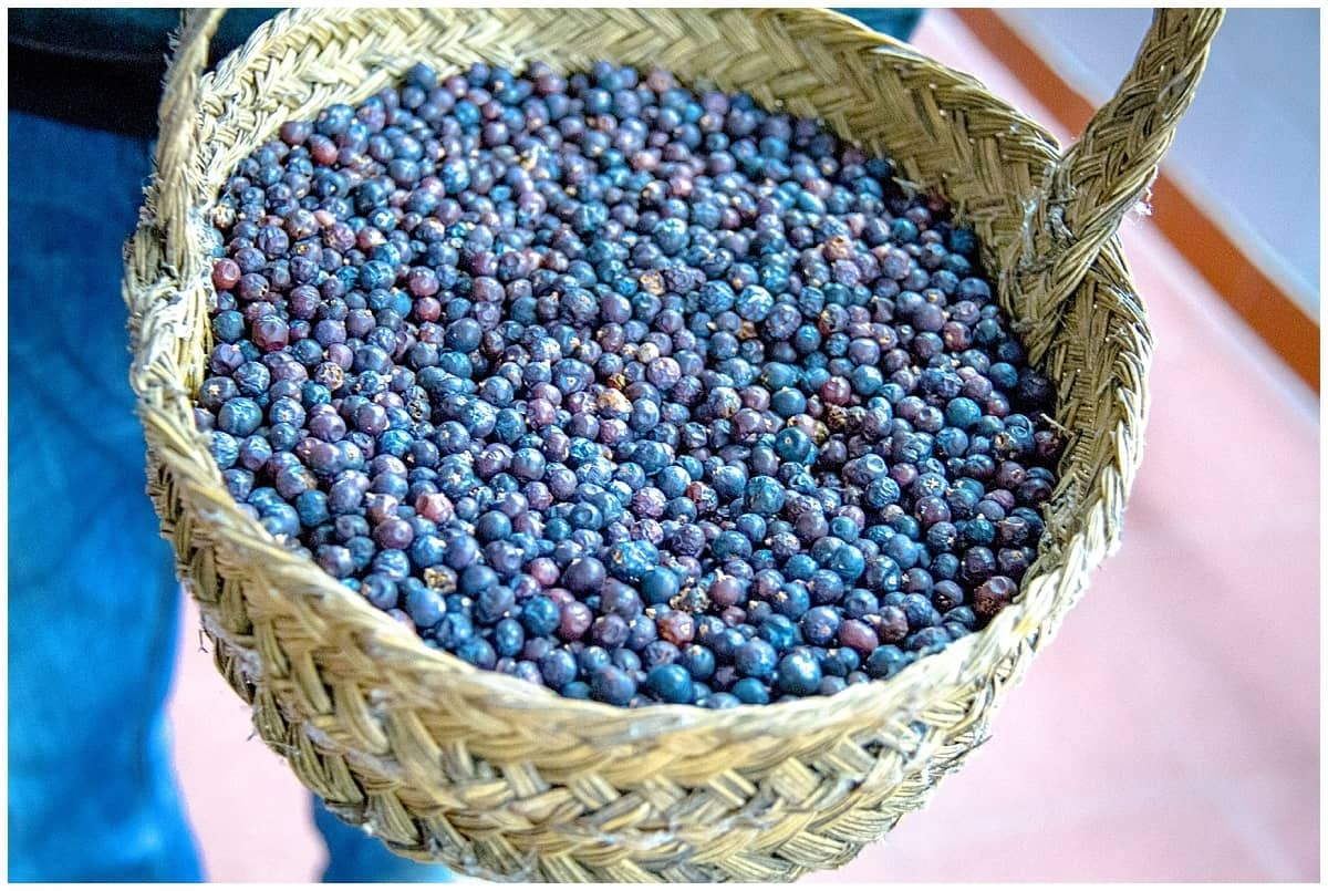 Juniper berries in a basket at a Mahon gin distillery in Menorca