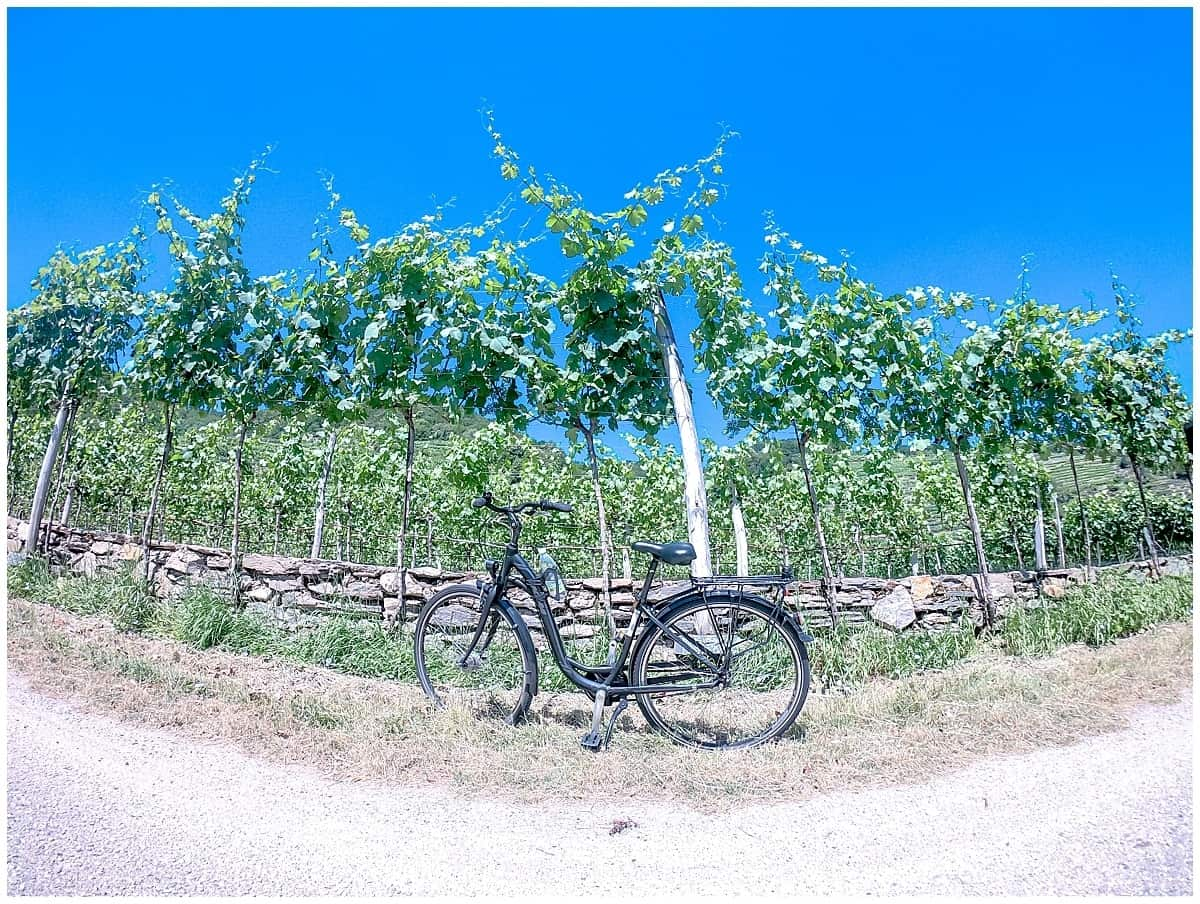 Bicycle against vineyards in Wachau