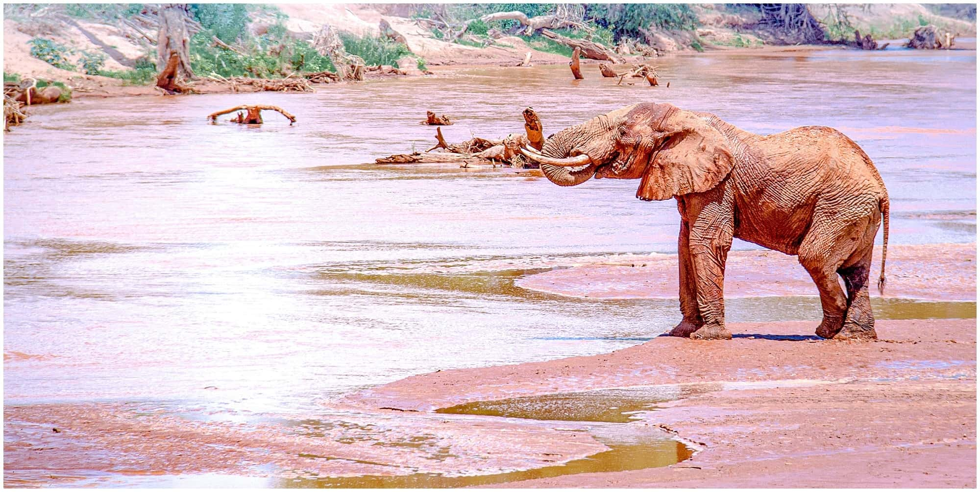 Elephant standing at the river edge in Kenya