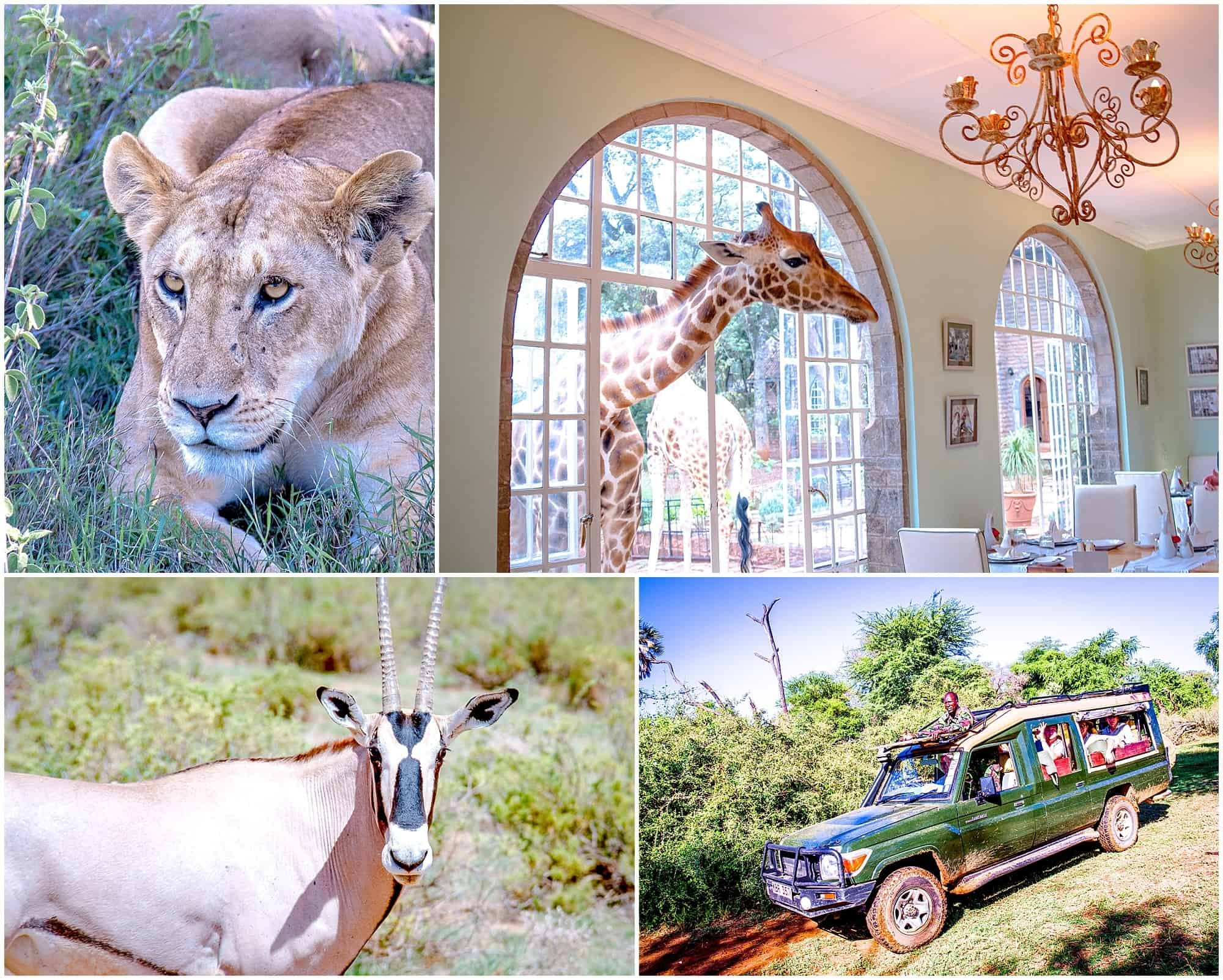 Safari wildlife collection montage