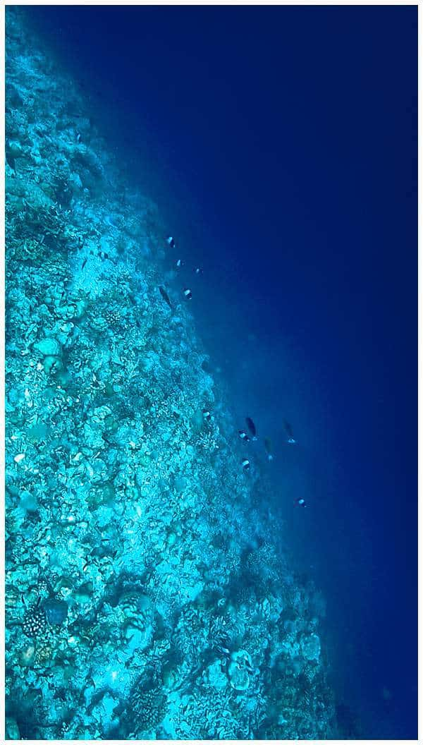 Underwater coral reef in the Maldives