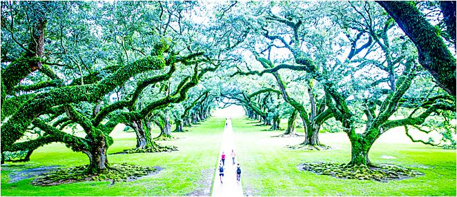 Oak Alley Plantation Louisiana New Orleans Day Trip