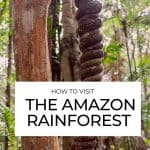 When it comes to what to do in the Amazon rainforest, it's time to swap typical tourist attractions for these natural activities. Amazon rainforest travel takes patience but reveals great beauty. Put hiking, canoeing, fishing and relaxing onto your Amazon itinerary. Here we explore the Amazonas region in Brazil. #Amazon #Rainforest #Travel cover image