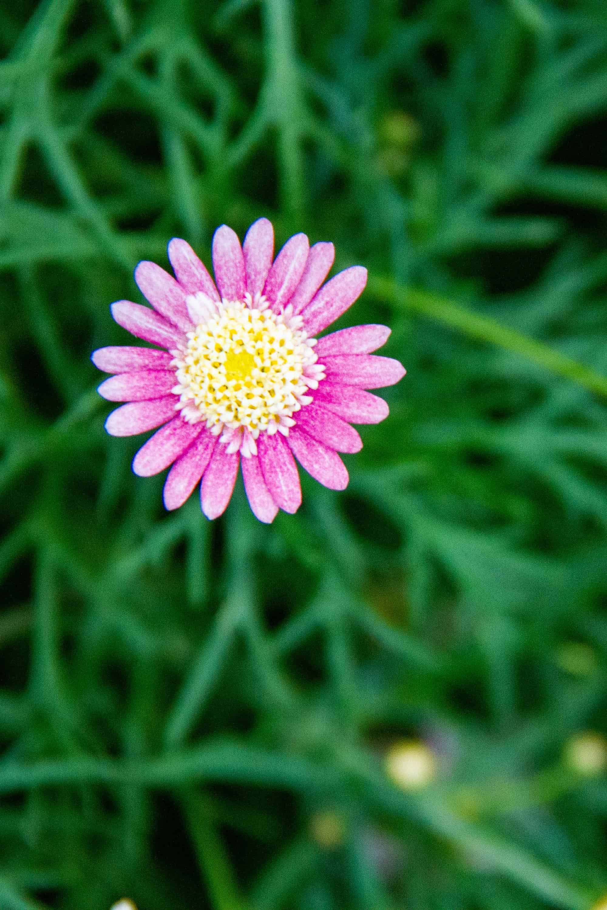Pink flower with green leaves in the background for nature summer bucket list ideas