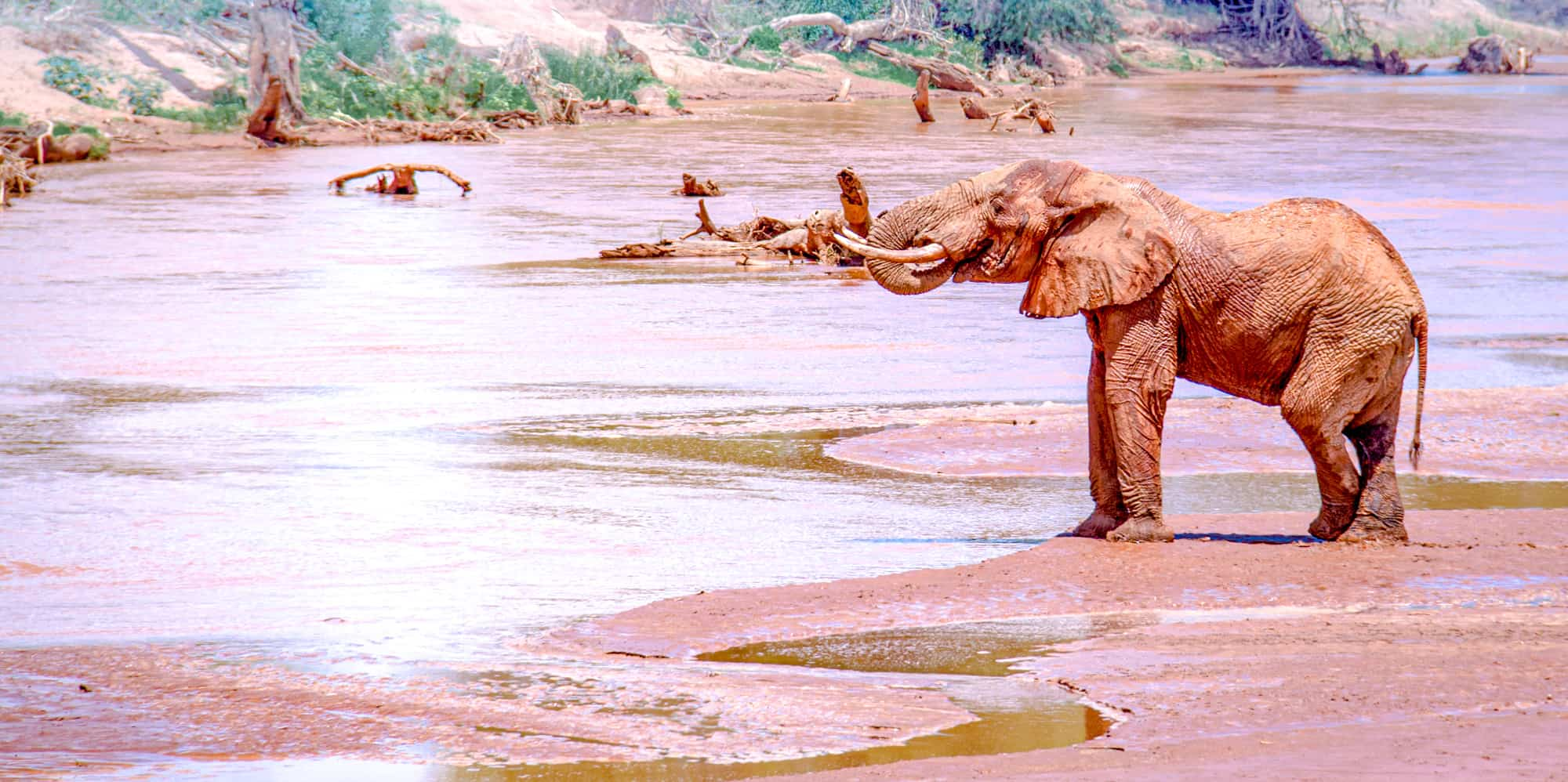 Elephant drinking water for the Kenya Bucket List and Hidden Gems in Kenya article
